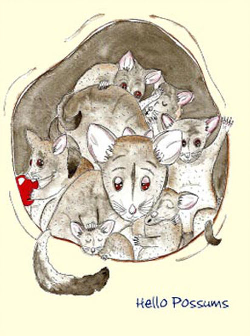 Australian Greeting Card ~ Hello Possum