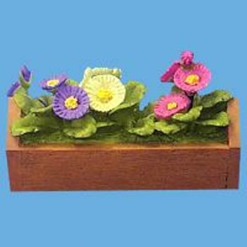 Miniature -- Cineraias in a Planter Box