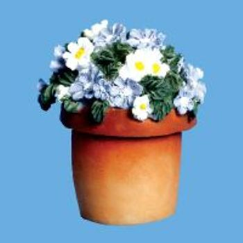 Miniature -- Daisies Blue & white in a Terracotta Pots
